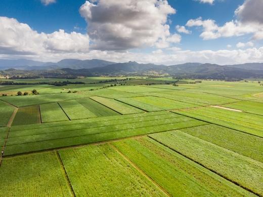 Setor sucroenergético estima moagem de 11,9 milhões de toneladas de cana na safra 2021/22